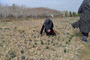 ارایه آموزشهای مهارتی در کشاورزی و گردشگری در قزوین