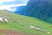 اختصاص ۷۸ هزار هکتار از مراتع چالدران به عشایر کوچرو در شمال استان