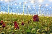 روزگار ناخوش بهرهبرداران پرورش گل در کهگیلویه و بویراحمد