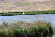 افزایش حجم آب ورودی به پنج تالاب نقده