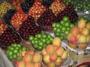 افزایش ۵۰ درصدی قیمت میوههای تابستانه