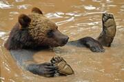 عکس روز | آب بازی خرس