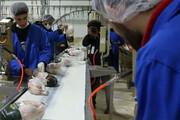 قیمت مرغ در خراسان شمالی؛ بالاتر ازنرخ مصوب
