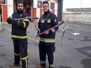 شهروندان از صید مار خودداری کنند