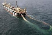 کشتی ترال حامل ۳۲ تن انواع ماهی در جاسک توقیف شد