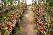 بهره برداری از ۳۵۰ هکتار گلخانه در پارسآباد