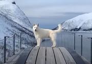 فیلم  سفر مجازی به کوههای آلب با سگ راهنما