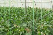 راهاندازی ۵۰ گلخانه هوشمند در چهارمحال و بختیاری