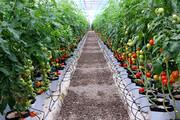 گلخانه؛ فرشته نجات کشاورزی همدان