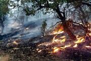 بازگشت آتش به مناطق جنگلی گیلان