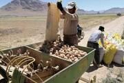 پیشبینی تولید ۲۰۰ هزار تن سیبزمینی در چهارمحال و بختیاری