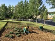کاشت ۸ هزار مترمربع گل فصلی در منطقه ۱۳