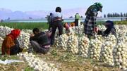 ۴۵ هزار میلیارد تومان ارزش تولیدات کشاورزی و دامی