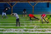 فعالیت برخی رشتههای ورزشی در کردستان بلامانع شد