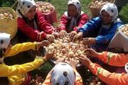 زنان مازندرانی؛ تولیدکننده محصولات ارگانیک