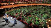 متفاوتترین تماشاگران یک برنامه موسیقی   اپرا برای گل و گیاه در زمانه کرونا