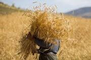 مطالبات کشاورزان کهگیلویه و بویراحمدی پرداخت میشود