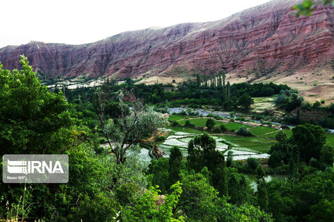 آب رودخانه شاهرود در رگ شالیزارهای الموت قزوین
