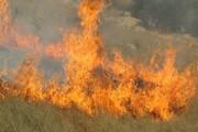 ۹۰ درصد آتشسوزی جنگلها عمدی است