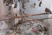 دستگیری متخلفان زندهگیری سهره طلایی در پلدختر