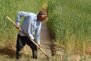 اجرای طرح ارتقای سلامت محصولات کشاورزی