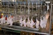 کشف ۳ تن مرغ احتکارشده در کشتارگاه یاسوج
