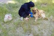 حامی حیوانات بی پناه