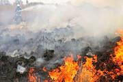 آتش به جان جنگلهای کوه تنوم و تنگ لیلم افتاد
