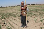 ۱۷۶ هزار خانوار روستایی خراسان رضوی فاقد بیمه اجتماعی هستند