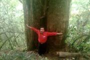 شناسایی بزرگترین درخت سرخدار هیرکانی در مازندران