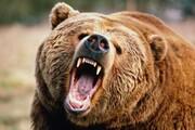 ویدئو ۱۸+ | حمله خرس وحشی به ۲ مرد کوهرنگی