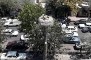 همسایگی اهالی محله جامیشاوان تبریز با لکلکها