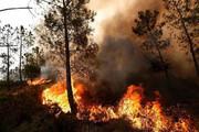 تصاویری تکاندهنده از سوختن جنگلهای باشت کهگیلویه و بویراحمد