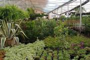 تولید بیش از ۱۴۲ میلیون واحد انواع گل و گیاه زینتی در محلات
