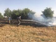 آتشسوزی مزرعه گندم جنب باغ پرندگان اصفهان مهار شد