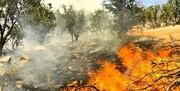 فیلم | آتشسوزی تنگ تکاب در کوه خائیز