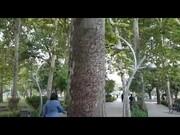 ماجرای طلسم درختان پارک لاله تهران چه بود؟