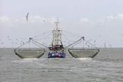 رخنه شبانه به ذخایر خلیج فارس   تداوم فعالیت کشتیهای چینی