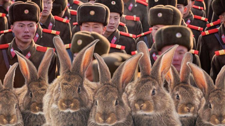 پرورش خرگوش در ارتش كره شمالي
