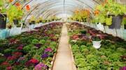 صدور ۱۲۰ پروانه احداث گلخانه کوچک در کردستان