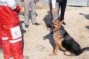 ویدئو | اعزام سگهای زندهیاب برای یافتن دختر گمشده در کردکوی