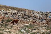 محل انباشت زباله شیف پاکسازی شد