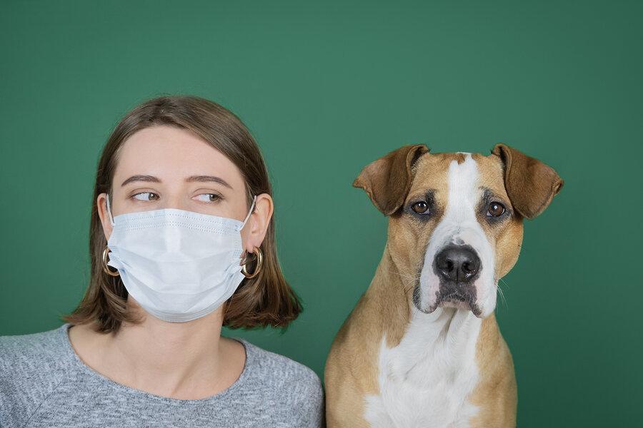 حیوانات خانگی ـ کرونا