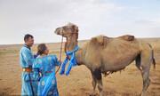 ماجرای فرار یک شتر باوفا | حیوانی که پس از ۹ ماه به خانه بازگشت