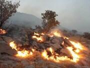 وقوع حریق در ۸۰۰ هکتار از عرصههای طبیعی استان تهران