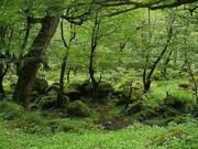 آقایان مدعی هستند که جنگل آقمشهد وقف یک امامزاده است | مساحت این جنگل به اندازه یک استان است | اراضی ملی را پشت نقاب قانون غارت میکنند
