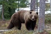 ویدئو | درخواست جالب خرس برای غذا