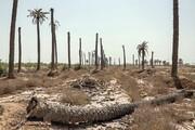 تصویر | قبرستان نخلها در خوزستان
