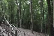 ۵۶۰۰ هکتار جنگل در اختیار یک شخص!
