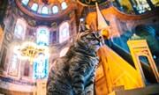 سرنوشت گربه ایا صوفیه پس از تبدیل شدن آن به مسجد چه میشود؟